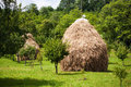Hay piles in garden two large Royalty Free Stock Photos