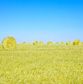 Hay rolls, blue sky and yellow field in summer. Royalty Free Stock Photo