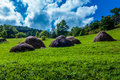 Hay stacks in the field on a sunny day Royalty Free Stock Photography