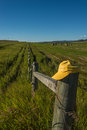 Hay stacks in field and yellow hat on the fence Royalty Free Stock Photo
