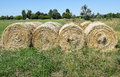 Hay stacks on the meadow Royalty Free Stock Images