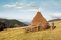 Hay stacks on meadow at carpathian mountains ukraine sunny morning landscape with pine tree highland forest and destinations and Stock Images