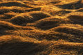 Hay sunrise abstract grass cut and dried in field lit by morning sun Royalty Free Stock Photo