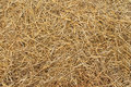 Hay texture Royalty Free Stock Photo