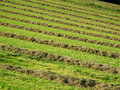 Hay windrows Stock Photos