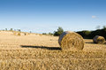 Hayfield Stock Images