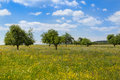 Hayfield in spring at a sunny day Royalty Free Stock Photos