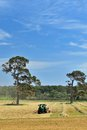 The haymaker tractor making windrows of hay on australian farm Royalty Free Stock Photography