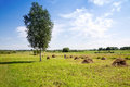 Haymaking summer landscape a hay is in the field Royalty Free Stock Photo