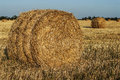 Haystack in a field of wheat large which are bundles hay round is the Stock Photo