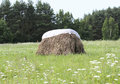 Haystack a stacked in the meadow Royalty Free Stock Photography
