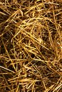 Haystack texture background yellow as dried hay Stock Images