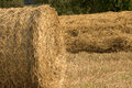 Haystacks on cornfield field to bring in the harvest Stock Photography