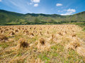 Haystacks in a farmland finished harvest Royalty Free Stock Images