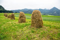 Haystacks on the field in zakopane poland Stock Photography