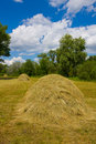 Haystacks in forest Royalty Free Stock Photography