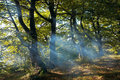 Haze in autumn forest Royalty Free Stock Images