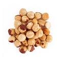 Hazel nut isolated on white background Royalty Free Stock Photo