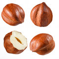 Hazelnut collection isolated on white Royalty Free Stock Photos