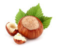 Hazelnut with cut kernel Stock Photos