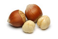 Hazelnut Group Stock Photo