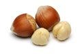 Hazelnut Group Royalty Free Stock Photo