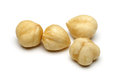 Hazelnut isolated on white background macro shot Stock Photos