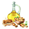 Hazelnut products. Paste, oil and nuts. Hand-drawn illustration