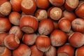 Hazelnuts. Background Royalty Free Stock Images