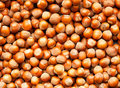 Hazelnuts background Royalty Free Stock Photo