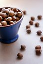 Hazelnuts in a bowl Royalty Free Stock Photo