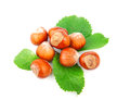 Hazelnuts filberts in shells and green leaves food ingredients Royalty Free Stock Photos
