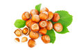 Hazelnuts filberts in shells and green leaves food ingredients Stock Photos