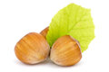 Hazelnuts with leaf over a white background Royalty Free Stock Image