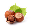 Hazelnuts with leaves in closeup Royalty Free Stock Photos