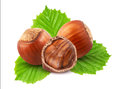 Hazelnuts with leaves Royalty Free Stock Photo