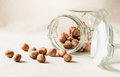 Hazelnuts scattered from the jar. Forest ripples on a light background.