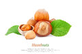 Hazelnuts text filberts in shells and green leaves food ingredients Royalty Free Stock Photo