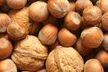 Hazelnuts and walnuts for backgrounds or textures Royalty Free Stock Photos