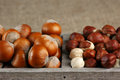 Hazelnuts in wooden box whole and peeled on burlap Royalty Free Stock Images