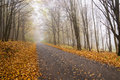 Hazy forest road asphalt in the autumn Stock Image