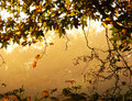 Hazy Warm Fall Landscape with Tree Branch Frame Royalty Free Stock Images