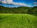 Hdr lanscape landscape with wheat field forests and blue sky in summer time Royalty Free Stock Photos