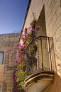 HDR photo of pink blooming plants growing on and across a stone wall in the Mdina city, former historic Malta capital Royalty Free Stock Photo