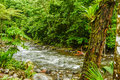 HDR Rainforest Stream Royalty Free Stock Photo