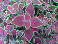 A heab coler plants is butifull Royalty Free Stock Images