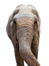 Head of a asian elephant isolated on white background Stock Photography