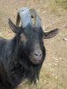 Head of a black goat Royalty Free Stock Photography