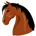 Head of brown horse with black mane against a white background Royalty Free Stock Image