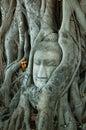 Head of Buddha image 2 Royalty Free Stock Images